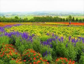 Scenic Hokkaido on Wheels