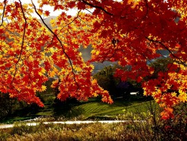 Autumn Concerto in Yamagata