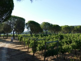 Cycling and Wines in Ribera Del Duero