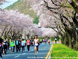 Gyeongju Cherry Blossom Marathon RUN-cation