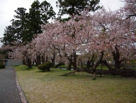 Wonders of Two Seasons in Yamagata